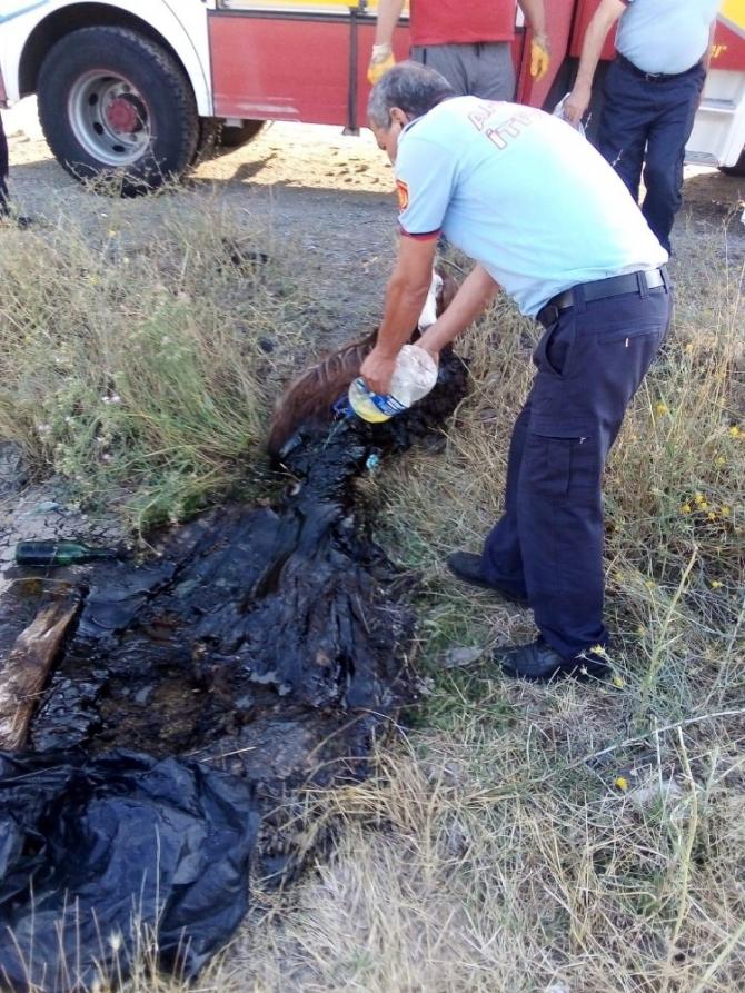 Asfalta yapışan keçiyi kurtarma operasyonu