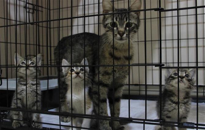 Pet hayvanlarında kene riskine dikkat