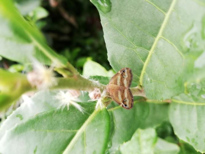 Vampir Kelebekler artık yüksek rakımlı yerlerde de görülmeye başladı