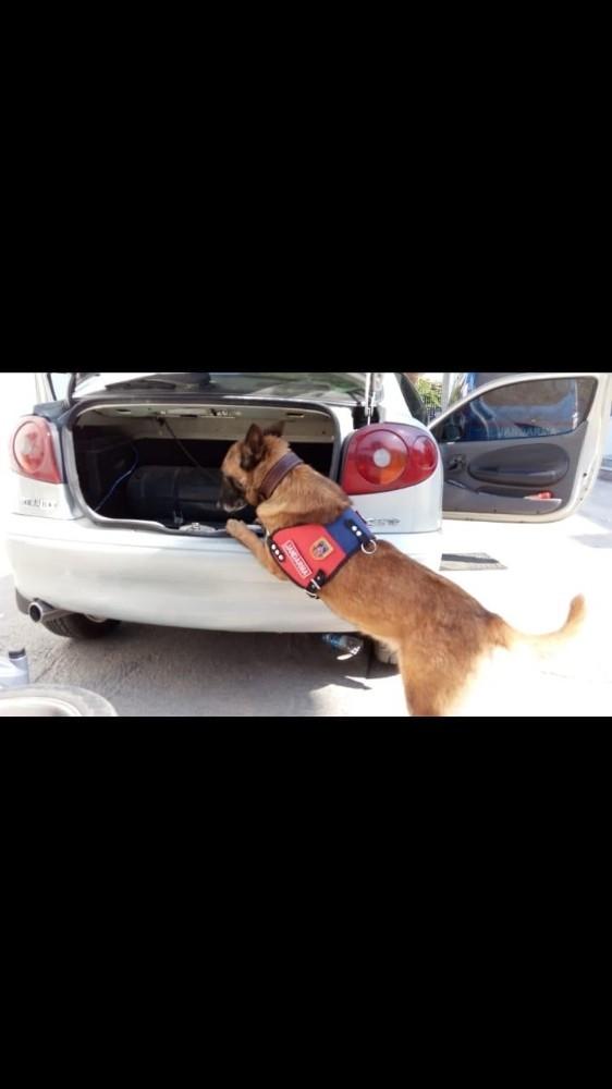 Narkotik köpeği tepki verdi, uyuşturucu ele geçirildi
