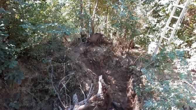Kör kuyuya düşen domuzlar uzun uğraşlar sonucu kurtarıldı