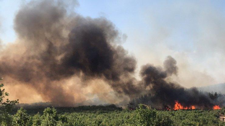 Bakan Pakdemirli Edirne'deki yangın bölgesinde inceleme yaptı