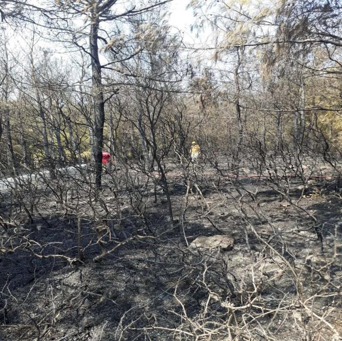 Aliağa'da çıkan orman yangını 2 saatte söndürüldü