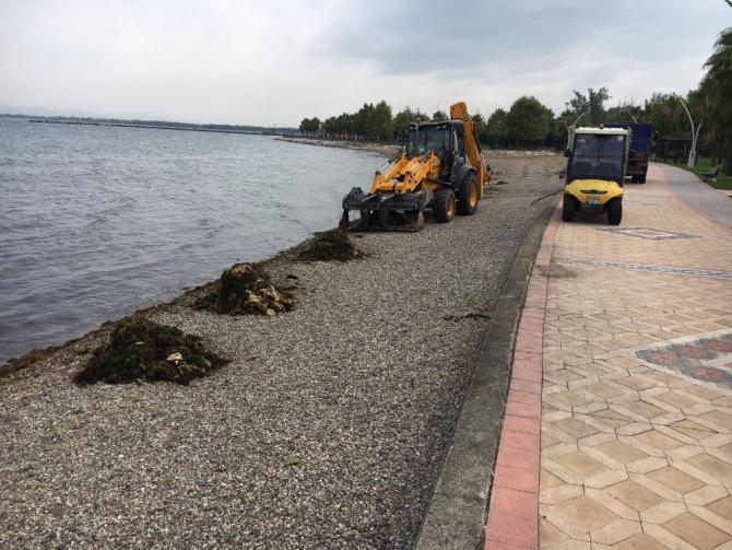 Kocaeli sahillerinden 53 ton yosun toplandı