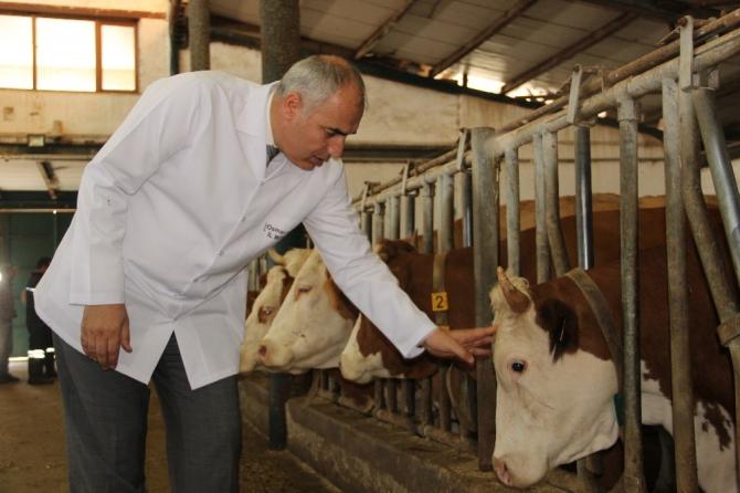Şap hastalığına karşı tedbir için yıl sonuna kadar 3.5 milyon hayvan aşılanacak