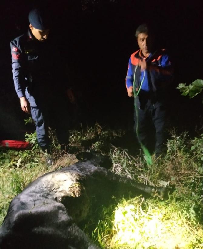 Sakarya Nehri'ne düşen ineği AFAD ekipleri kurtarıldı