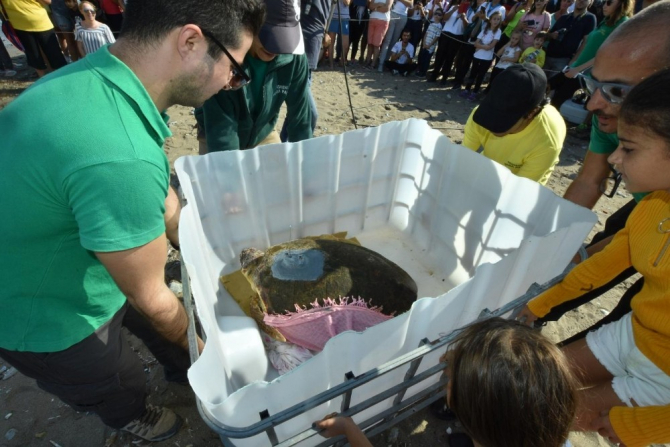 Tedavi edilen Caretta 'Astrid' denize bırakıldı