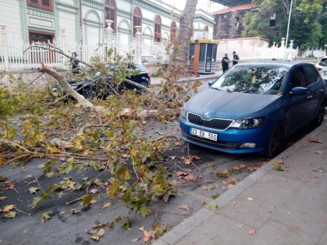Beşiktaş'ta ağaçtan kopan dallar caddeyi trafiğe kapattı