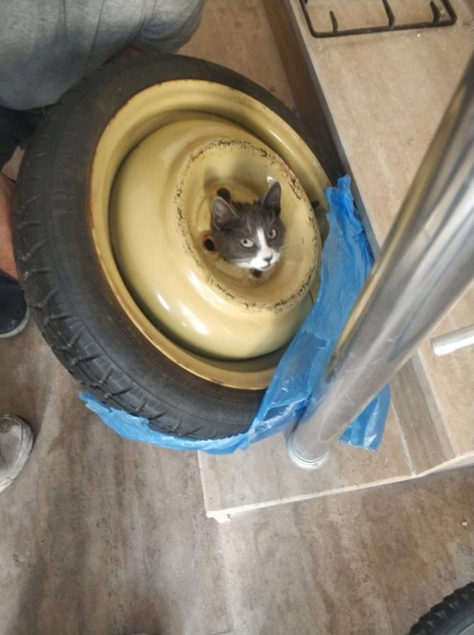 Yedek lastiğin jantına sıkışan kedi kurtarıldı