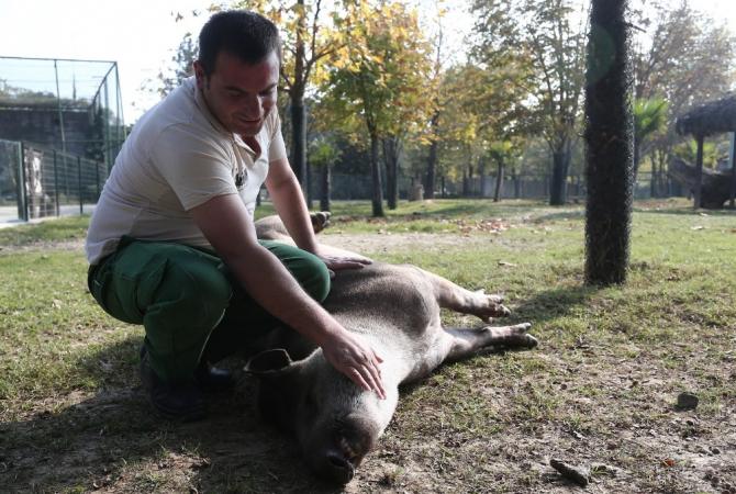 Tapirlerin masaj tutkusu