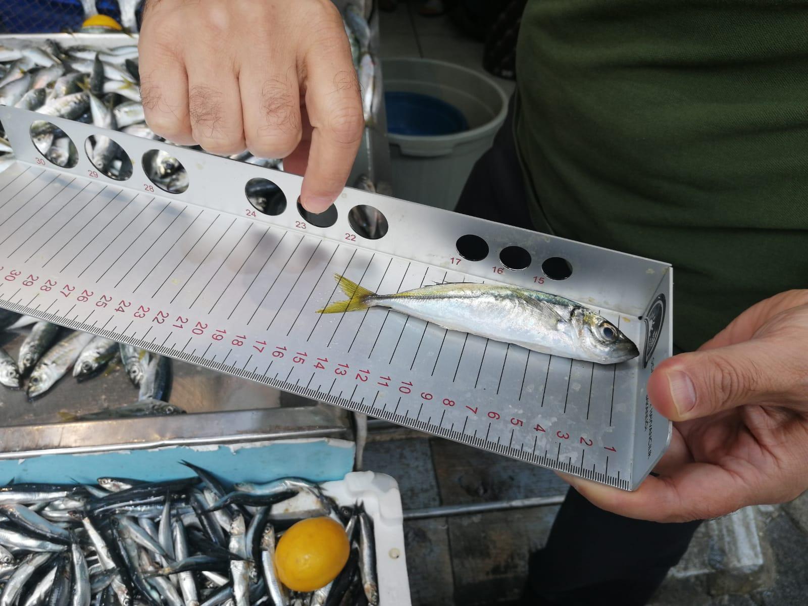 Pendik balık denetimine hız kesmeden devam ediyor