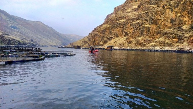 Fırat Nehri'nde 10 gündür tüm ekipler, kayıp sürücüyü arıyor