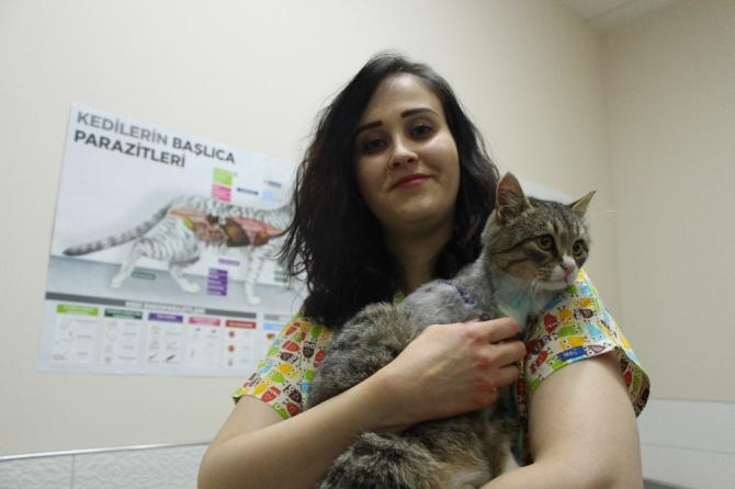 Üzerinden araç tekerleği geçen sokak kedisini veteriner hekimi kurtardı