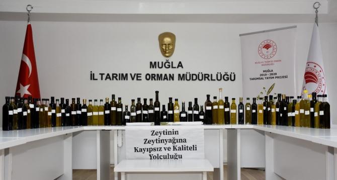 Kaliteli Zeytinyağı yarışma başvuruları sone erdi