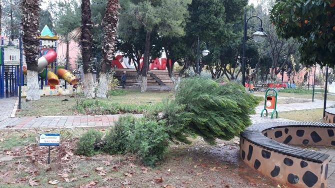 Kozan'da şiddetli yağmur ve fırtına ağaçları devirdi