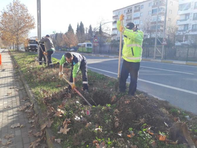 Kocaeli'de yol kenarlarındaki boş alanlar ağaçlandırılıyor
