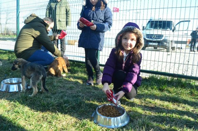 Lüleburgaz'da sokak köpeklerine 1.7 ton mama dağıtıldı