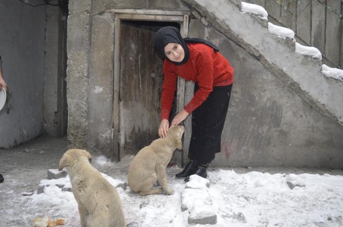 15 yaşındaki genç donmak üzere olan yavru köpeklere sahip çıktı