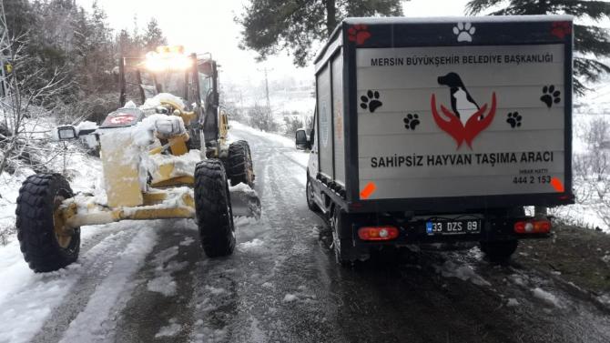 Yaralı köpek, yoğun karda donmaktan kurtarıldı