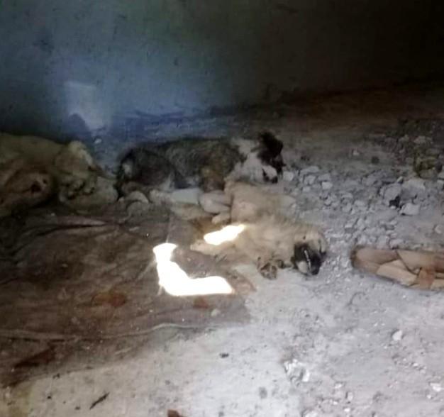 İzmir'de 12 yavru köpeğin zehirlenerek öldürüldüğü iddiası