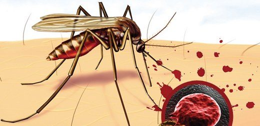 Onyekuru kimdir? | Sıtma nedir? | Sıtma tedavisi | Sıtma hastalığı