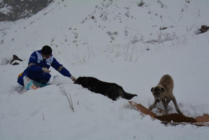 Yaralı köpeğin yavrularını sütle beslediler