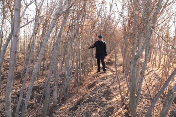Kocasinan'da hedef 100 bin ağaç dikmek