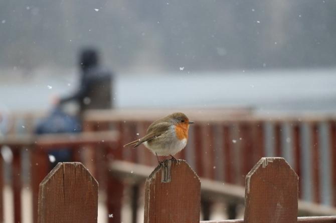 Bolu'da yüksek kesimlerde kar yağışı başladı
