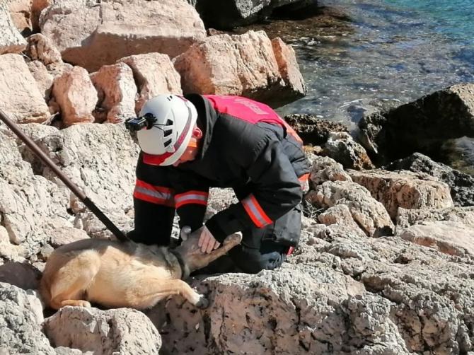 Başı plastik bidona sıkışan köpeği itfaiye ekipleri kurtardı