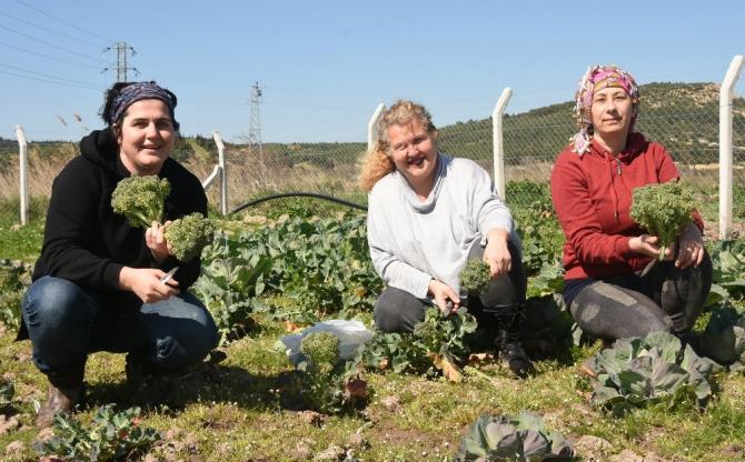 Aliağalı kadın çiftçilerden ilk hasat
