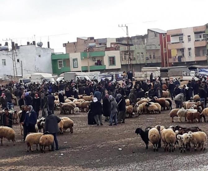 Viranşehir'de hayvan pazarı kapatıldı