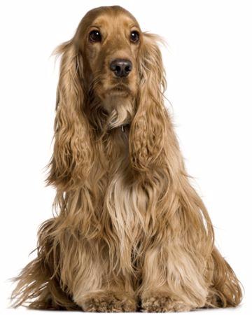Köpek çeşitleri ve özellikleri