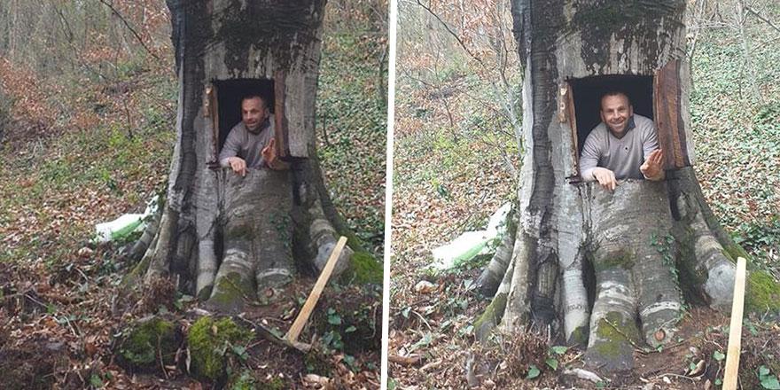 Virüsten korunmak için ağaç kavuğundan yuva yaptı