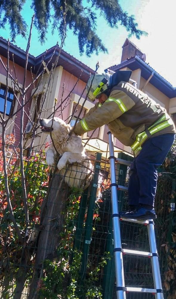 Villanın çitlerine takılan köpeğin yardımına itfaiye ekipleri yetişti