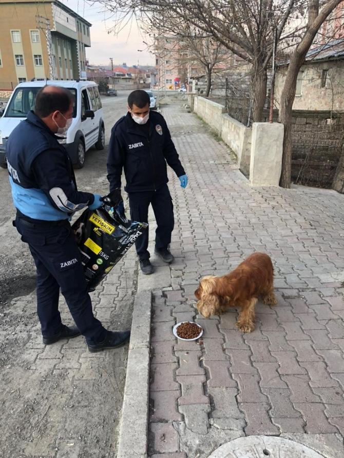 Horasan Belediyesi'nden sokak hayvanlarına mama ve su desteği