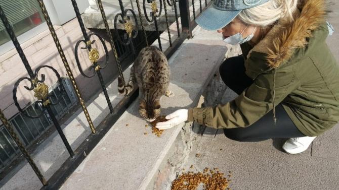 Sokak hayvanlarına Çıldırlı bayanlar sahip çıktı