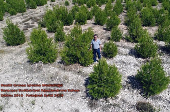 """Muğla Orman Bölge Müdürlüğü; """"Çalışmalar hukuka uygun"""""""