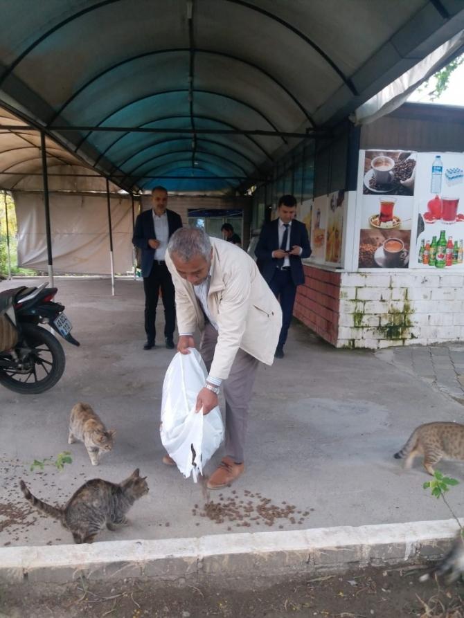 Ortaca'da sokak hayvanları aç ve susuz kalmıyor