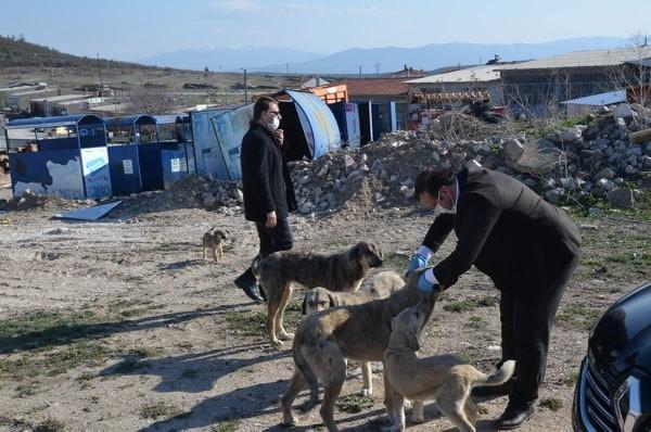 Belediye ekipleri sokak hayvanları için seferber oldu