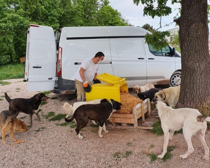 Adapazarı Belediyesi ekipleri sokak hayvanlarını unutmuyor
