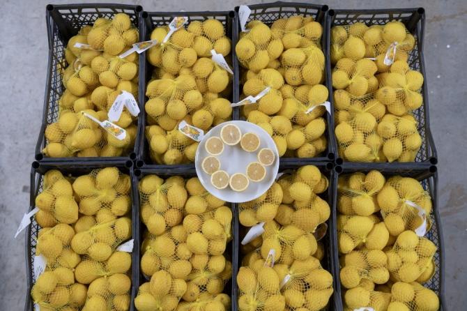 Mersin'in limonları bu kez başkent için yola çıktı