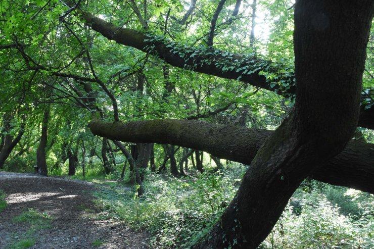 """""""Kesin korunacak hassas alan"""" ilan edilen Sığla Ormanları şifa kaynağı"""