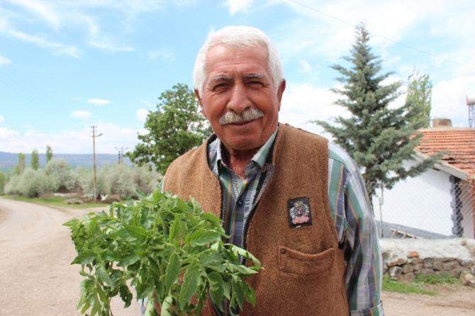 65 yaş üzeri vatandaşın bahçe bakımını belediye ekipleri yapacak