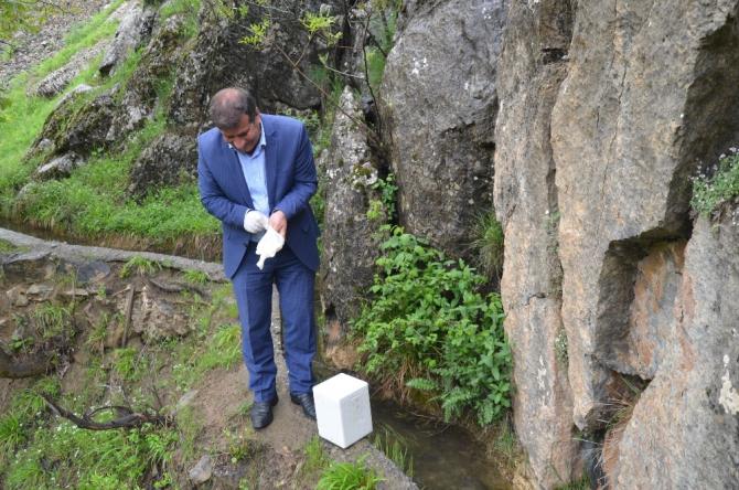 Şırnak'ta görülen ölü semenderler, araştırılmak üzere Ankara'ya gönderilecek