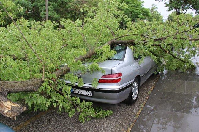 Yasağa rağmen park ettiği arabasının üzerine ağaç devrildi