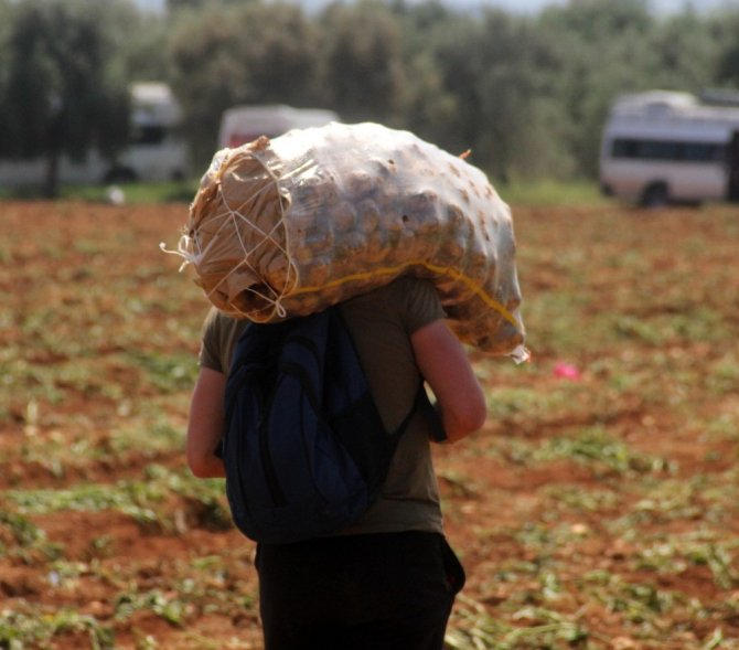 Adana'da 40 derece sıcakta her gün 110 ton patates yüklüyorlar