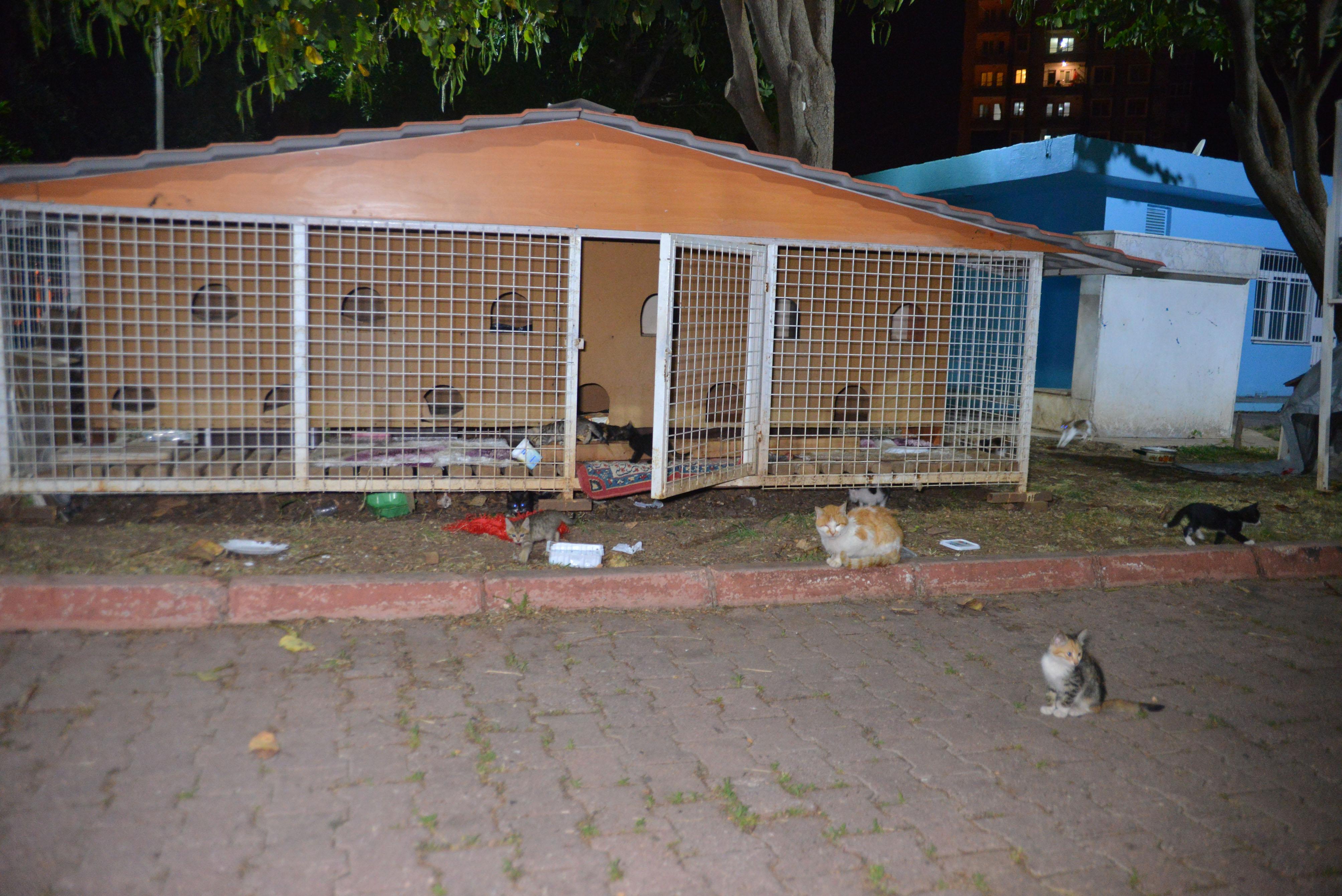 Böyle vicdansızlık görülmedi! 6 yavru kedi ve annesi ölü bulundu