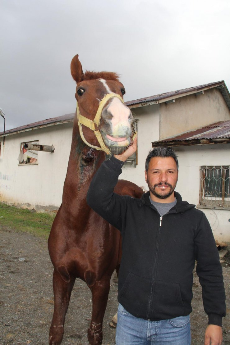 Şampiyon cirit atlarının ahırına girip, bir atın boğazını kestiler