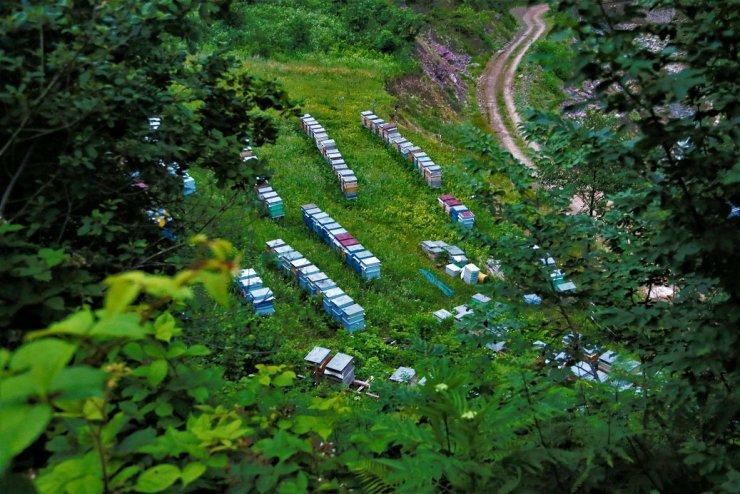 OGM Müdürü Karacabey: 56 'bal ormanı' kurulmasını hedefliyoruz