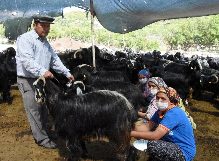 Atadan kalma yöntemle keçi peyniri üretiyorlar